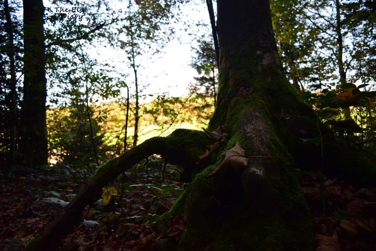 nature suisse et hs (3)